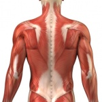 Autogenic inhibition and restoring patient muscle strength