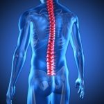 Spine care should include prevention says spine society, chiropractors