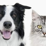 Standard Process Veterinary Formulas goes beyond the brush with new supplement