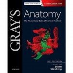 Anthony V. D'Antoni, DC, authors a chapter for Gray's Anatomy