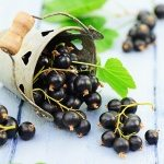 Looking for immune support? Try black currant seed oil