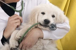 Why veterinary chiropractic should be bigger than it is