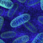 Patient mitochondrial health and the immune system