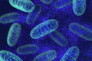 The top 3 nutrients that boost mitochondrial function