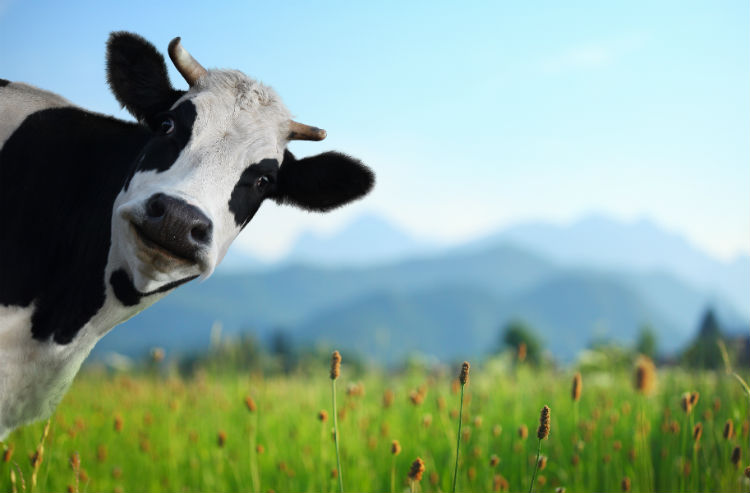 The benefits of grass-fed meat and how it helps healthy cell signaling