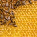 What's the latest buzz on propolis?