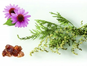 Using the wisdom of ancestral medicine to recover your health.