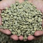 The surprising benefits of green coffee bean extract