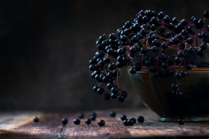 What are elderberries good for?