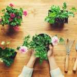 Best house plants to de-stress your practice and purify the air