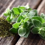3 amazing benefits of oregano oil you don't know about