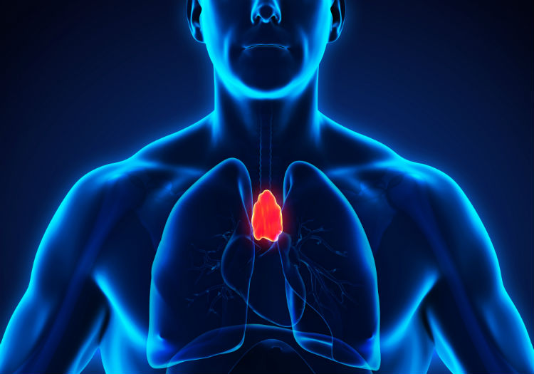 Simple Ways To Strengthen Your Thymus Gland