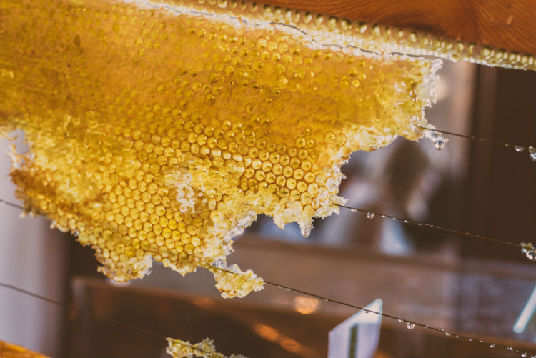 Honey is no exception in this regard, particularly manuka honey. What is is, what makes it so special, and what are the benefits of manuka honey?