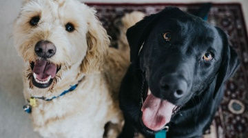 CBD for canines: What you should know