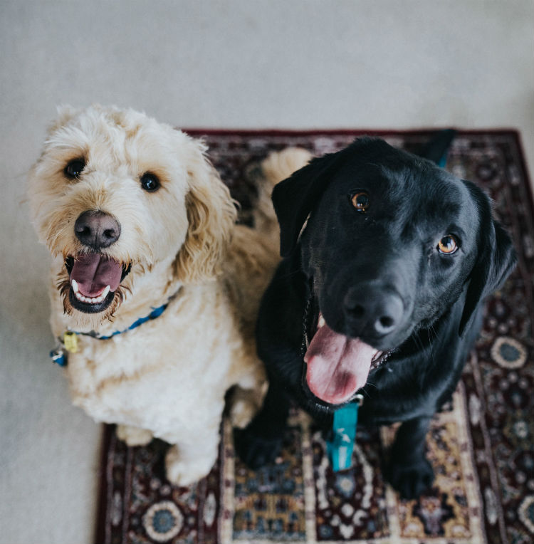 Many pet owners are seeking natural ways to ease their animal's discomfort. CBD for canines is an all natural way to provide relief for your furry friend.