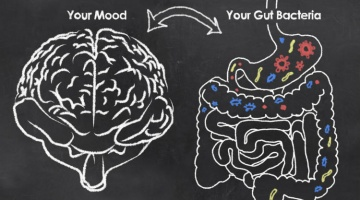 Exploring the gut-brain axis and its connection to depression