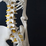 The science of chiropractic: Your practice needs science