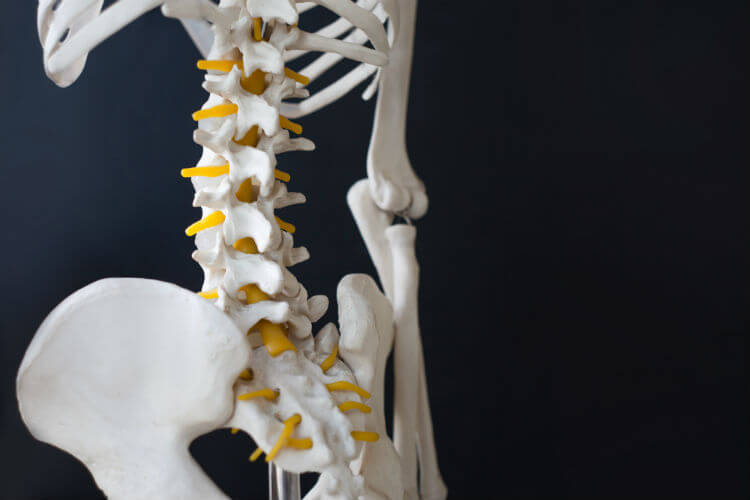 A skeleton trying to understand the science of chiropractic
