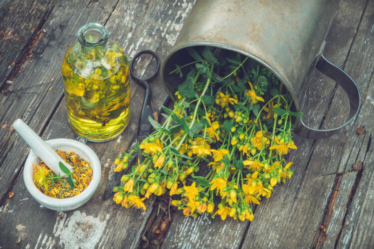 A gather of herbs showing the benefits of St. John's wort