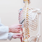 "Spinal cord ""smarter"" than previously thought"