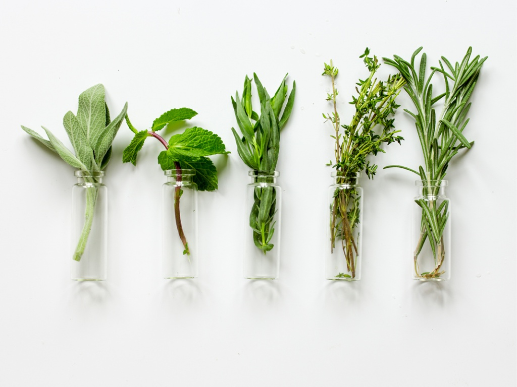 For doctors of chiropractic, herbs and medicinal herbal remedies are specialties that, as an adjunct treatment to manipulation in daily clinical practice...
