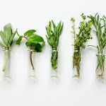 Expanding chiropractic offerings with herbs and herbal solutions