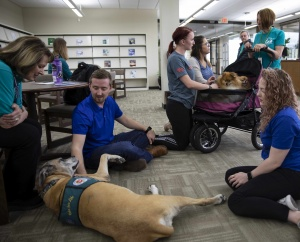 therapy dog at CUKC