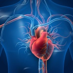 Getting to the Heart of the Matter: L-Arginine and L-Citrulline Supplementation to Improve Blood Circulation