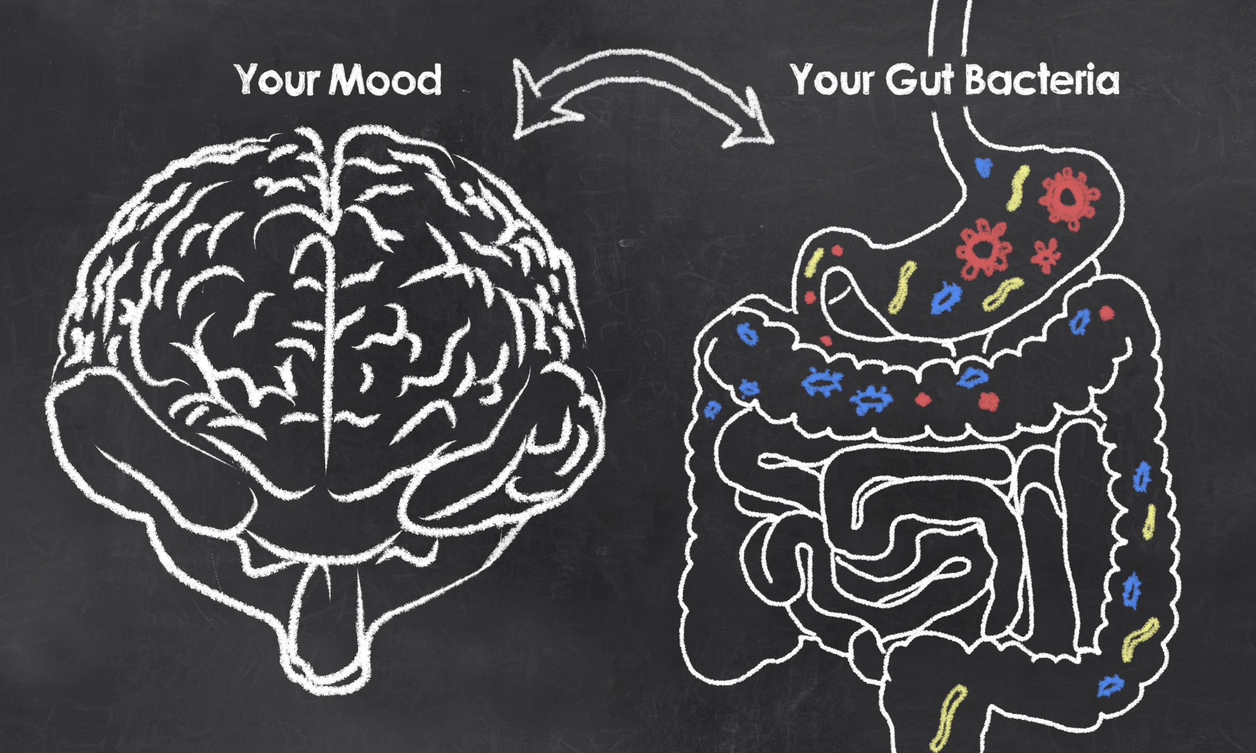 gut microbiome and depression