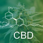 Full-spectrum CBD: Why a tiny bit of THC can have a big impact on patients