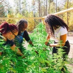 New Mentor Program for Black Hemp Farmers Announced by CBD Leader Charlotte's Web