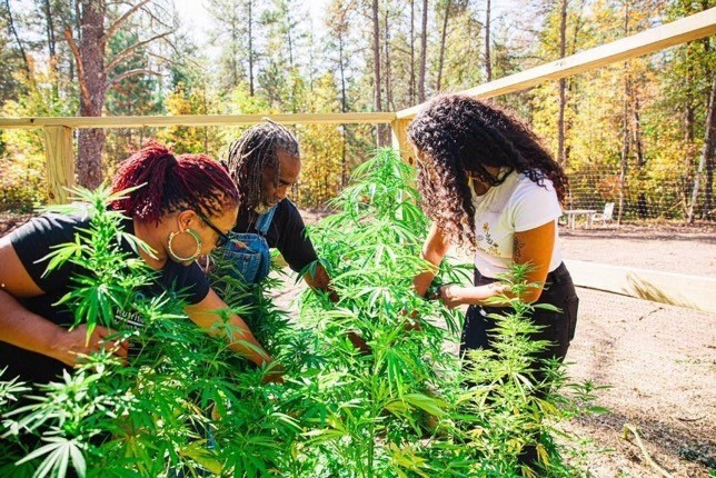 """Charlotte's Web, Inc., is launching """"Seeding Our Future, Together,"""" an mentorship program for Black hemp farmers and leaders."""