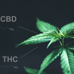 New poll reveals patient knowledge of CBD facts, THC