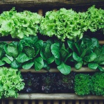 Research showing importance of nitric oxide supplements, leafy greens for building muscle and performance