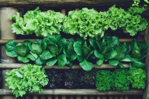 We now know our parents were absolutely right -- with the latest research showing the importance of eating leafy greens for building muscle and performance