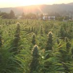 Using CBD for Enhanced Patient Outcomes? 6 tips for ensuring success