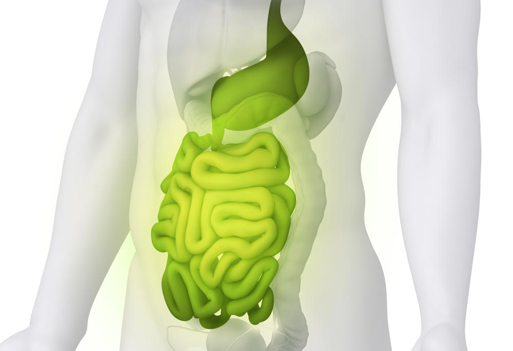 Human digestive system, enzyme supplements